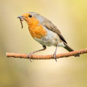 Pré-assessment is voor wakkere vogels